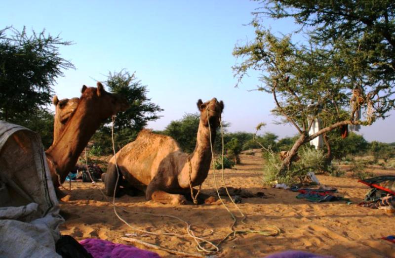 Rajasthan Motorcycle Touring Vacaciones-mandawa